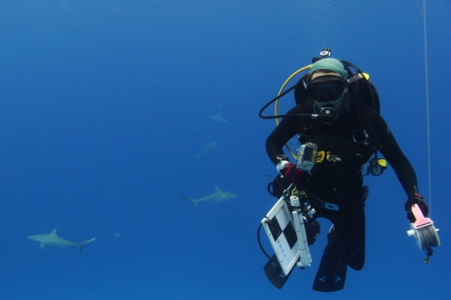 Rosie diving with sharks at Kure Atoll